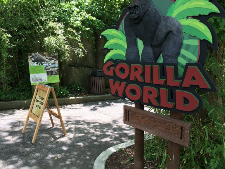 The Cincinnati Zoo shot and killed a western lowland gorilla on Saturday after a 4-year-old boy slipped into the animal's enclosure, a zoo official said at a news conference.